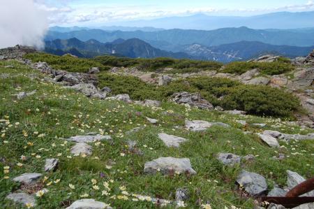 75北岳のお花畑