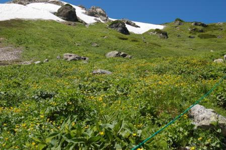 22小雪渓付近のお花畑