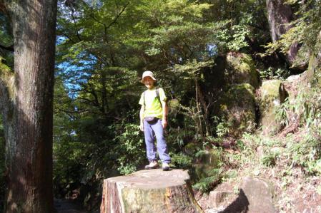 杉の巨木1