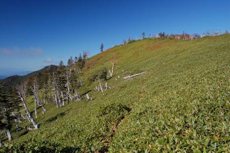 7白桧岳への笹尾根