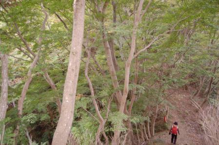 26上山ハイキングコース三葉峠