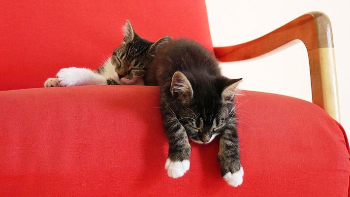 cat01218-1.jpg