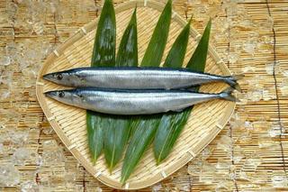 121006秋刀魚小