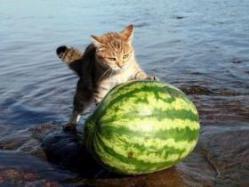 cat08013110016.jpg