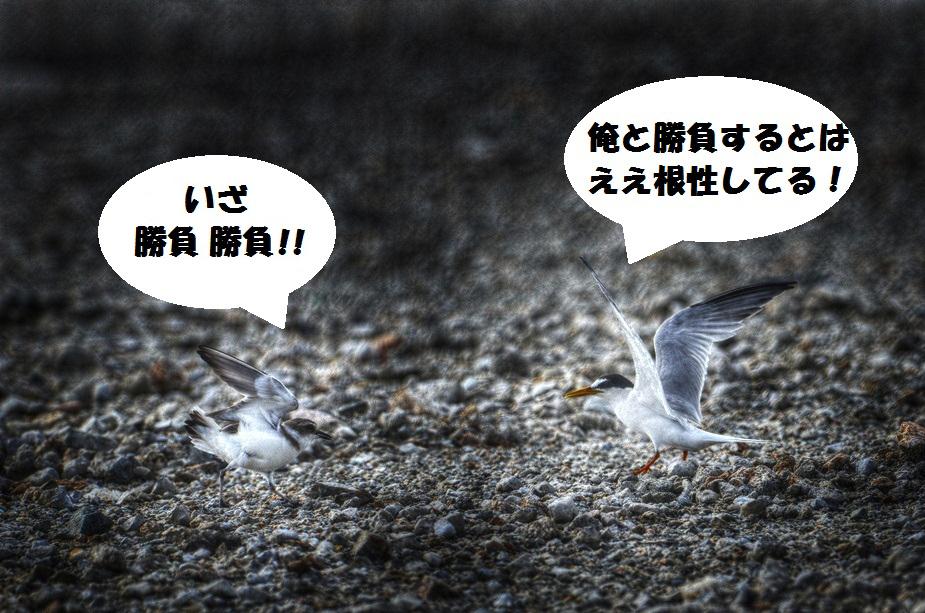 koajisashi1207_024b.jpg