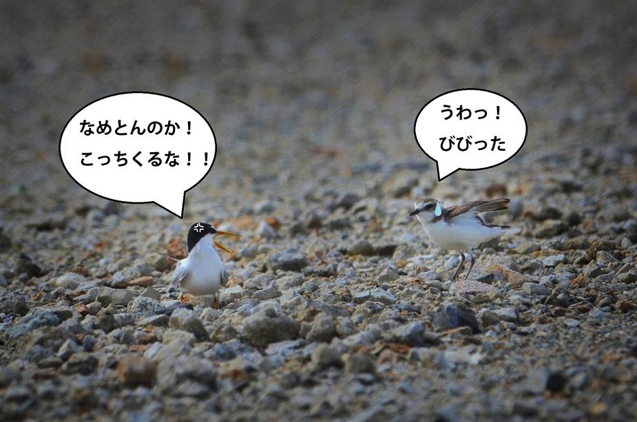 koajisashi1207_025.jpg