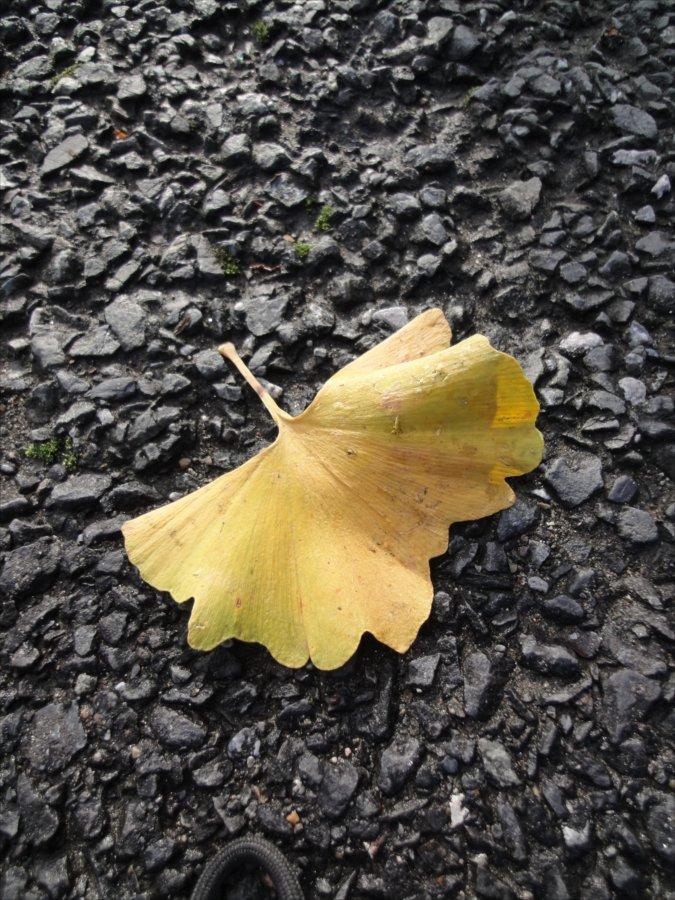 秋の葉っぱ深まり