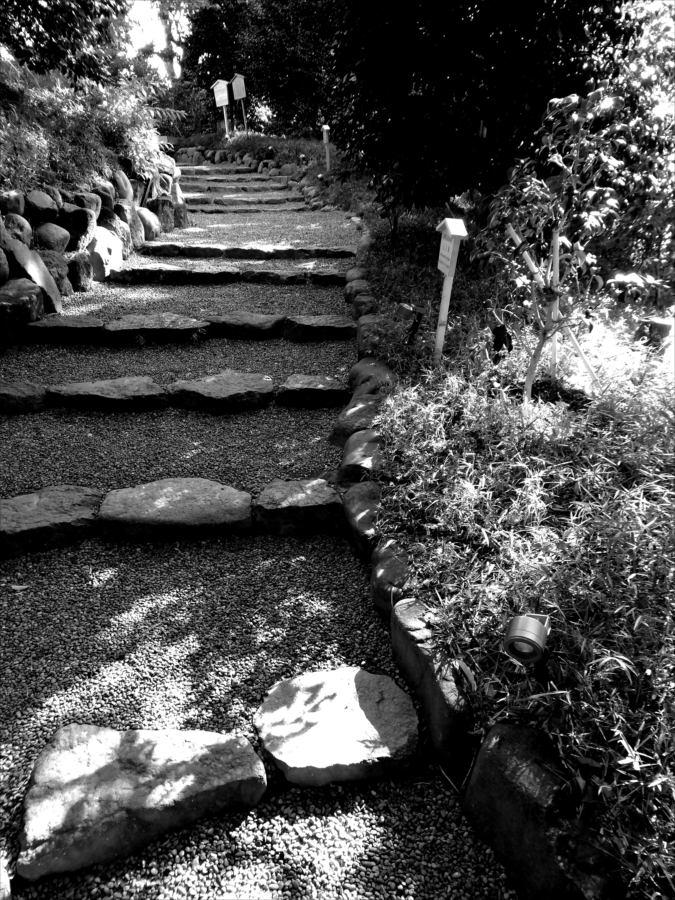 椿山荘散策路モノクロ