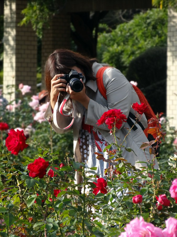 神代植物園ソニーバラ庭カメラ女子赤バラ
