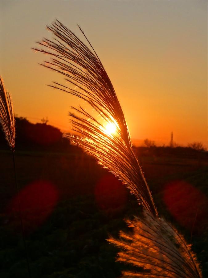 田舎夕景すすき縦