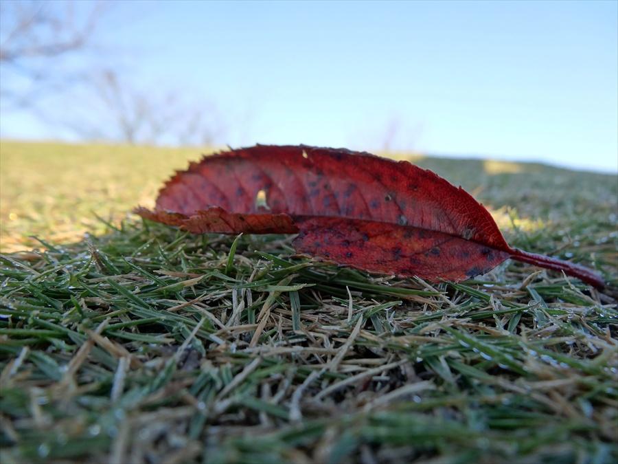田舎秋落葉