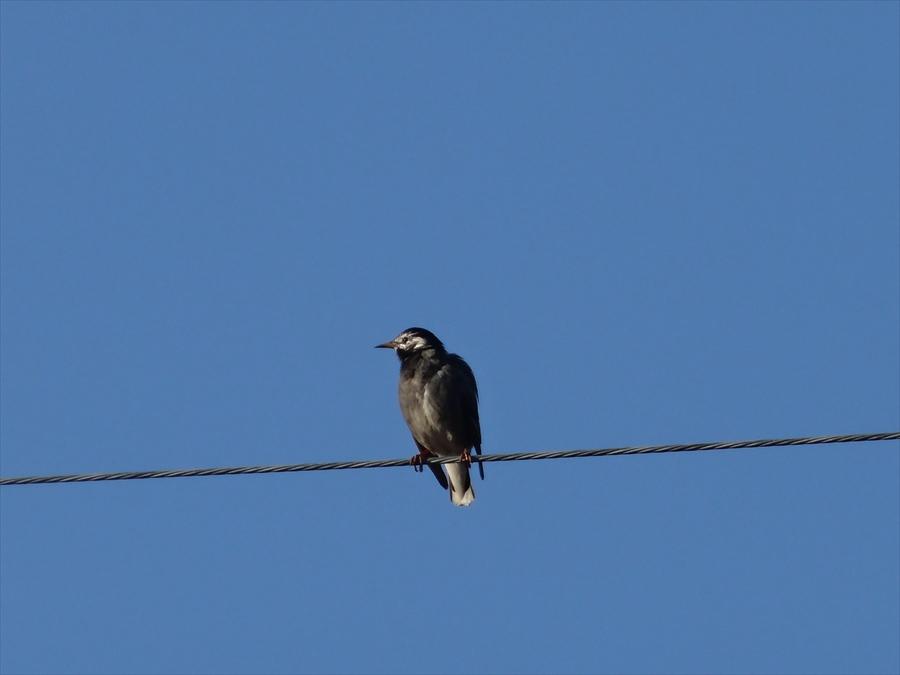 田舎秋渡り鳥電線