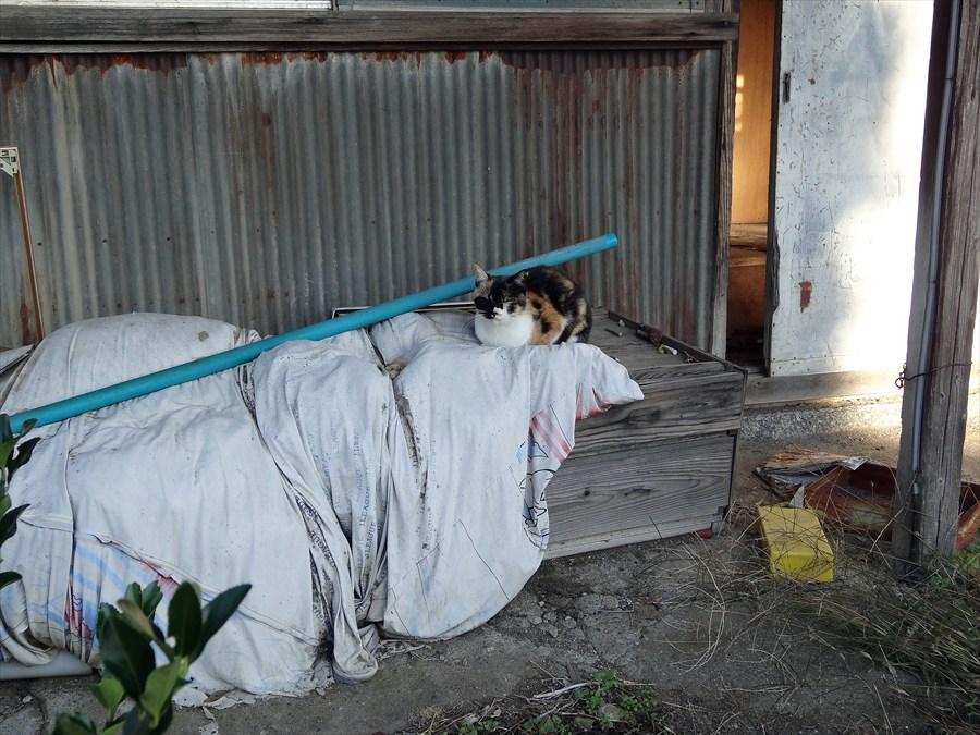 田舎秋猫ひなたぼっこ