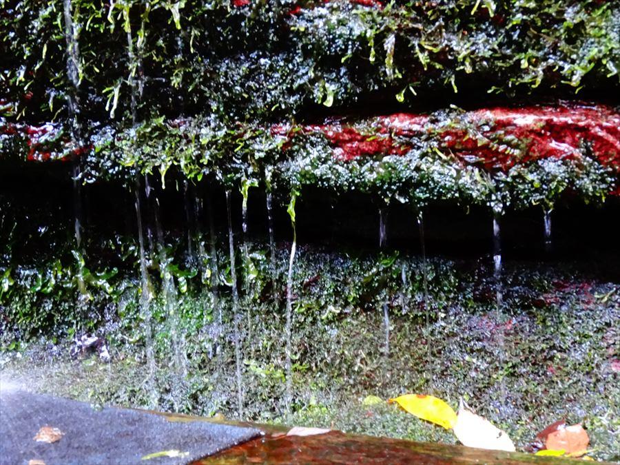 田舎秋湧水