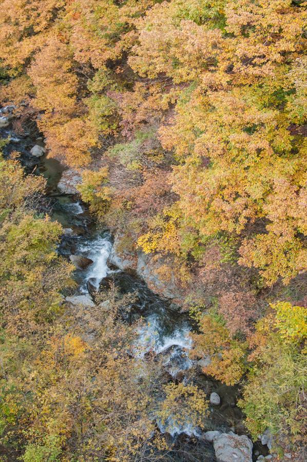 A山梨日川渓谷紅葉竜門峡入り口橋から覗く渓谷と黄葉
