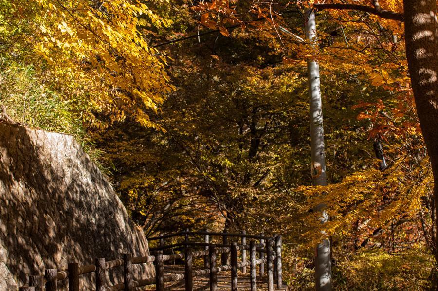 A山梨日川渓谷遊歩道スタート地点黄葉の森への導き