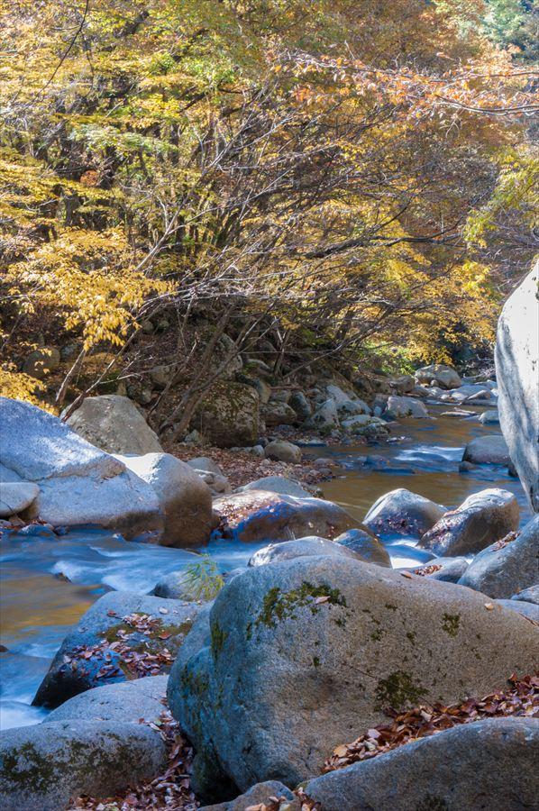 B山梨日川渓谷遊歩道スタート渓流と黄葉その2