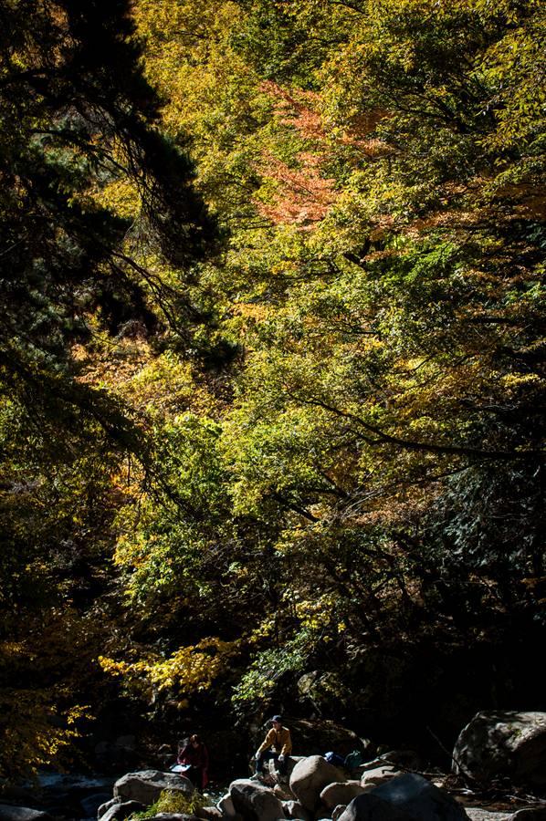 D山梨日川渓谷遊歩道渓流紅葉黄葉と休憩旅人