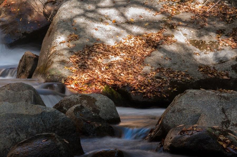 D山梨日川渓谷遊歩道渓流水流と石と落葉