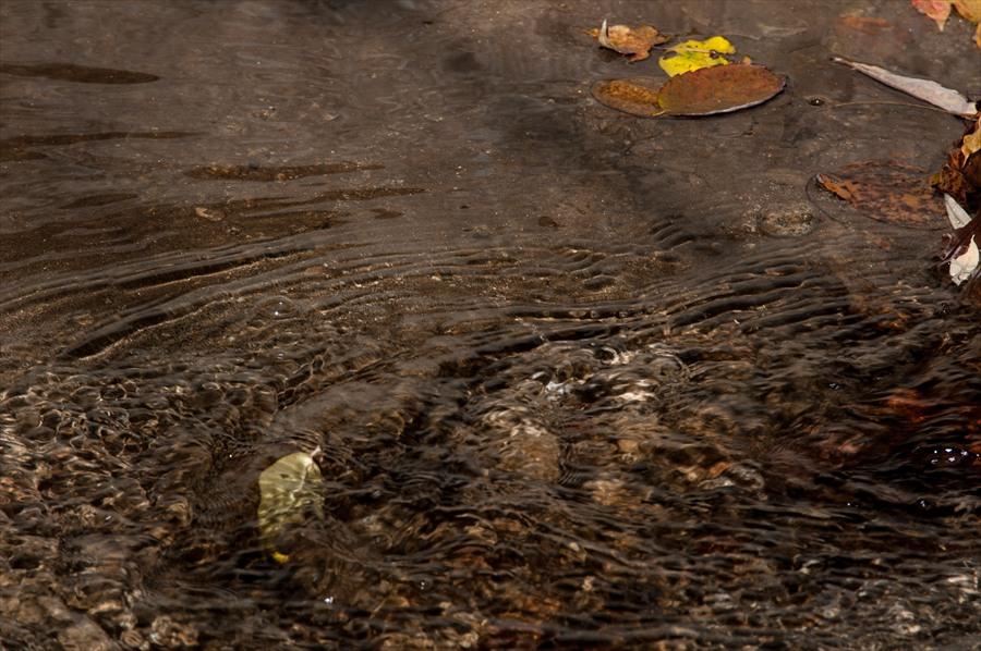 D山梨日川渓谷遊歩道渓流透明水と落葉