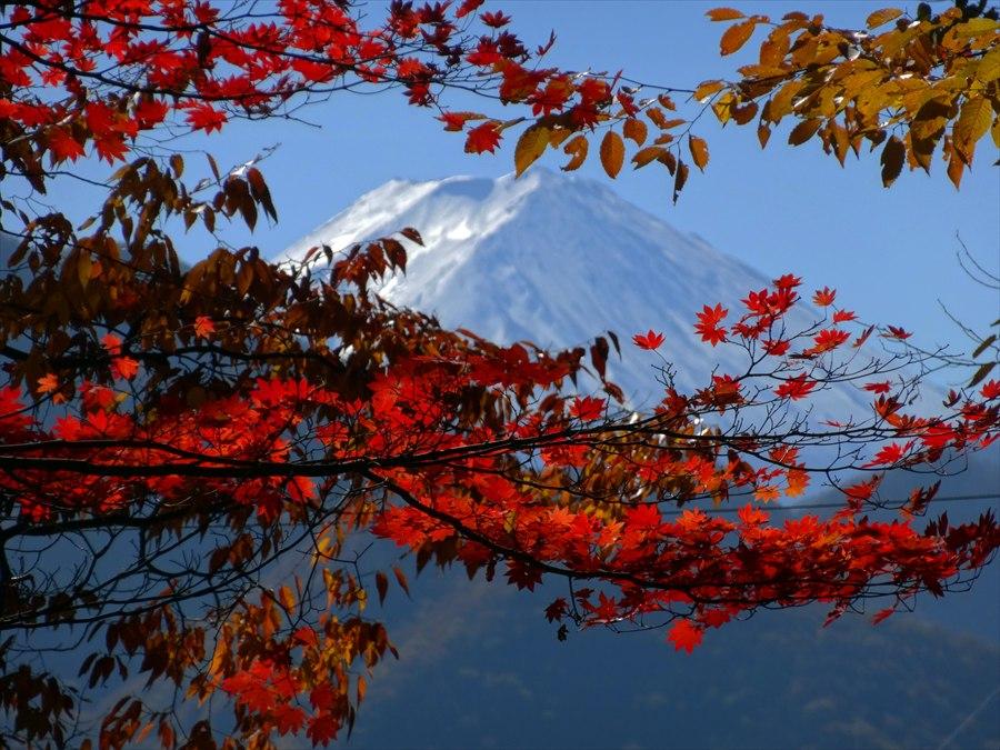 日川渓谷富士山と紅葉