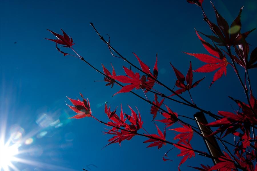 F山梨日川渓谷下り道紅葉太陽