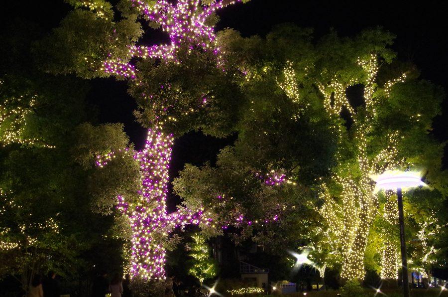 ミッドタウン桜とイチョウイルミ