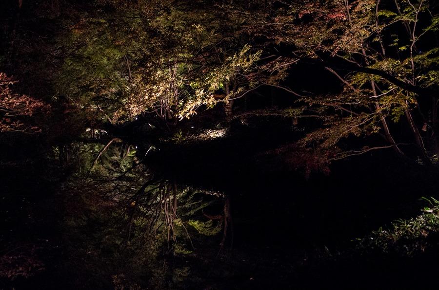 六義園ライトアップライトアップされた木々の水面映り込み