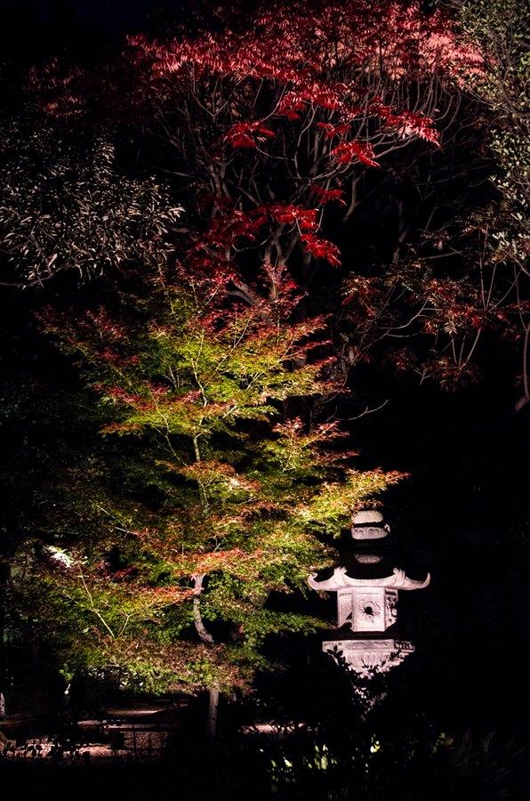 C六義園ライトアップ回遊路石灯篭と紅葉縦