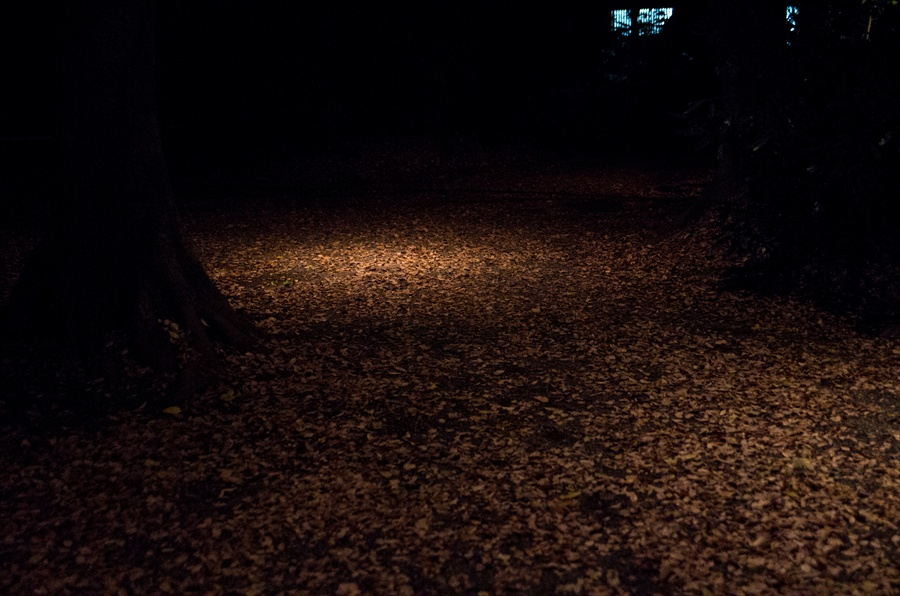 D六義園ライトアップ回遊路光る落ち葉だまり