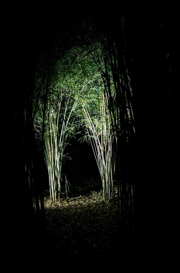 D六義園ライトアップ回遊路暗闇に光る笹だけ