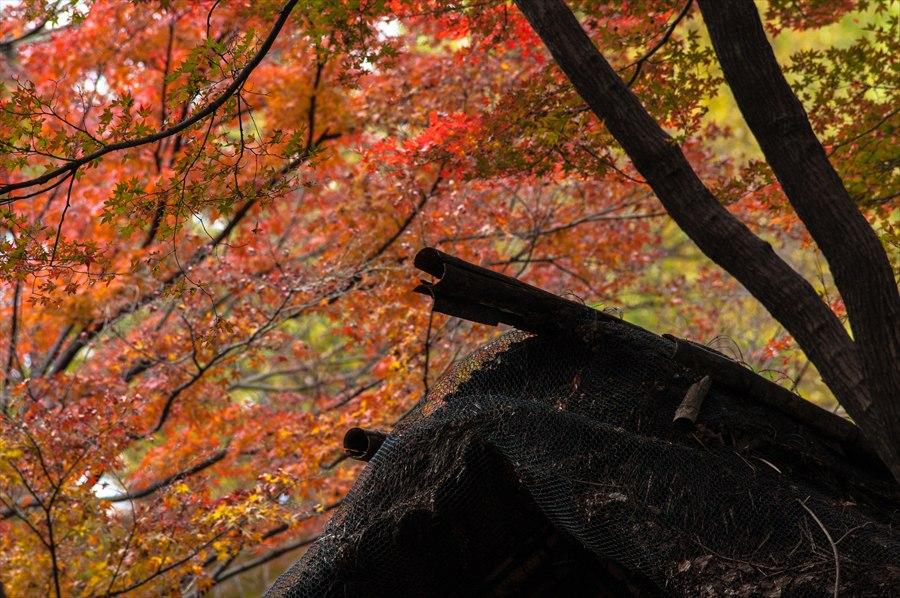 B1六義園四阿屋根と紅葉