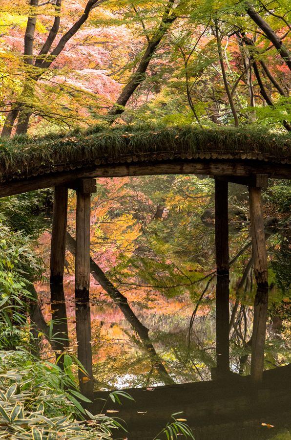 B1六義園池橋紅葉水面紅葉