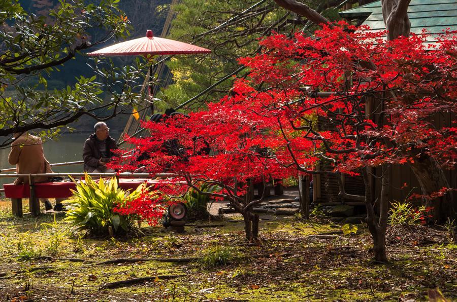 C1六義園お茶や前縁台と紅葉遠景