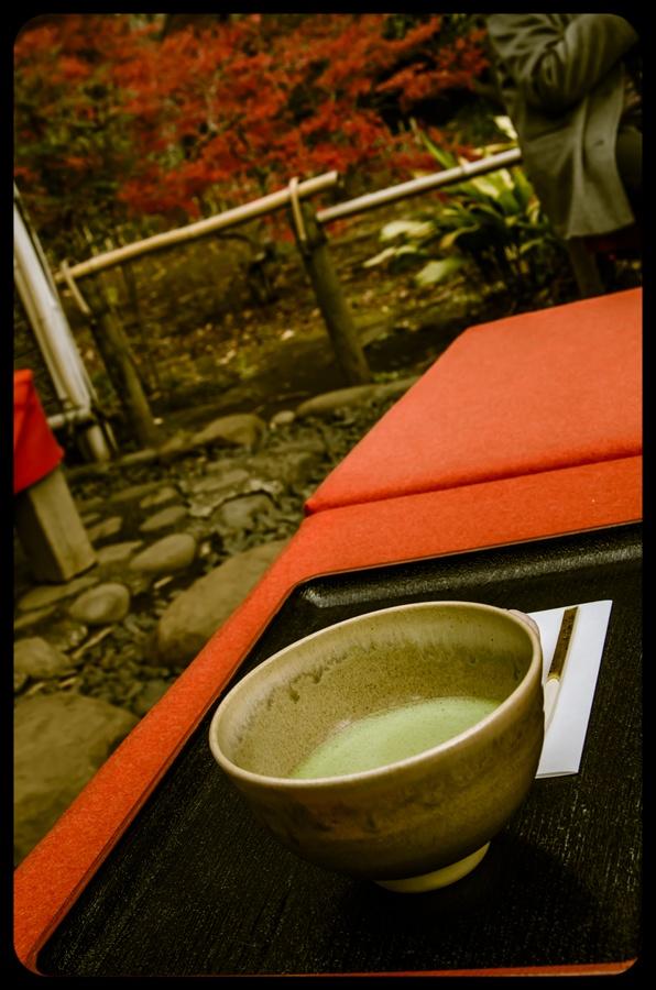 C1六義園お茶や抹茶と紅葉