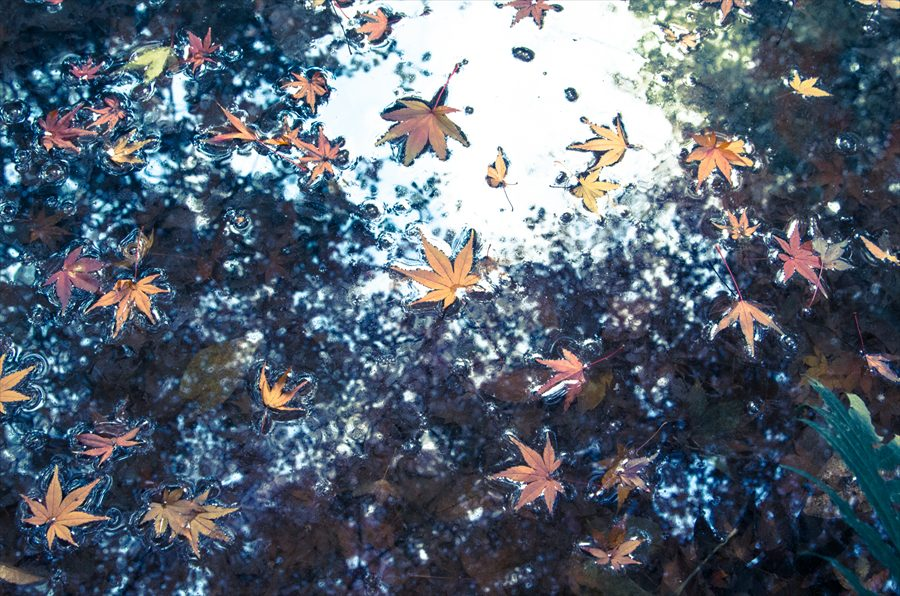 E六義園水面落葉青い水面