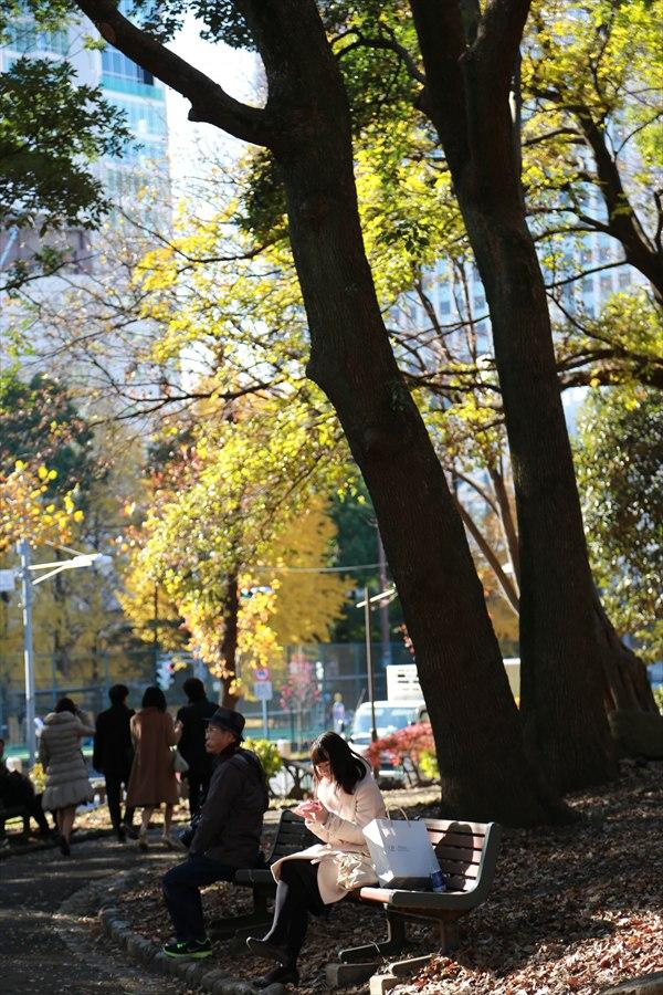 昼下がりイチョウ黄葉ベンチに佇む人