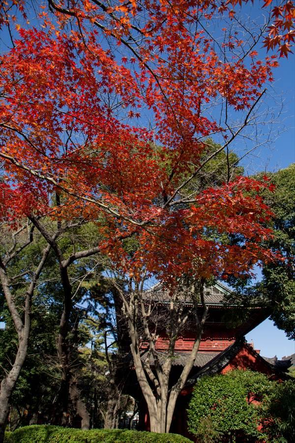 増上寺伽藍と紅葉00