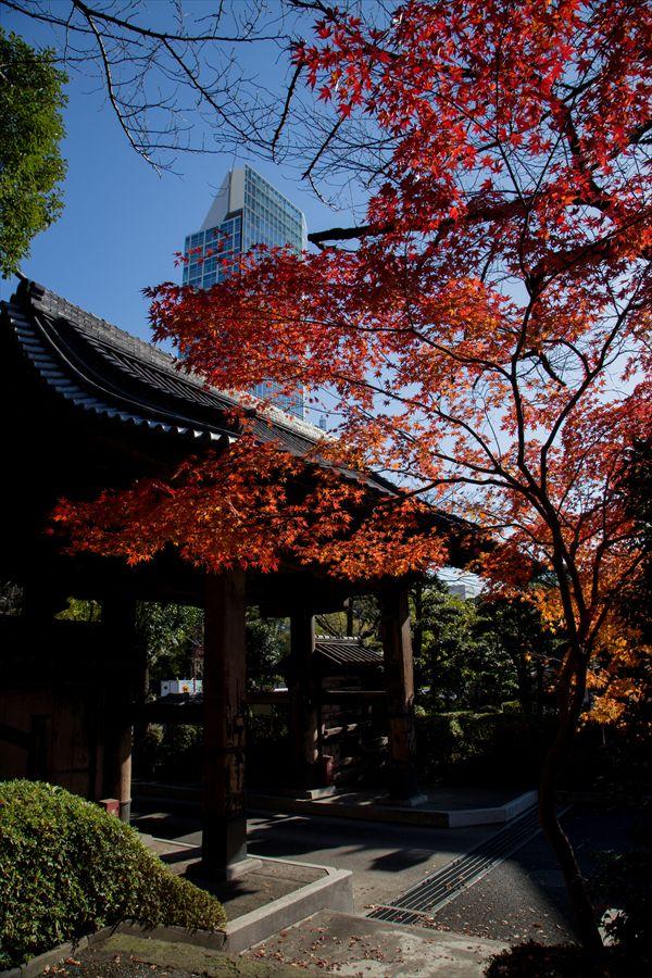 増上寺山門と紅葉01