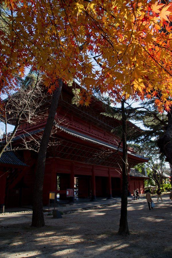 増上寺山門と黄葉03
