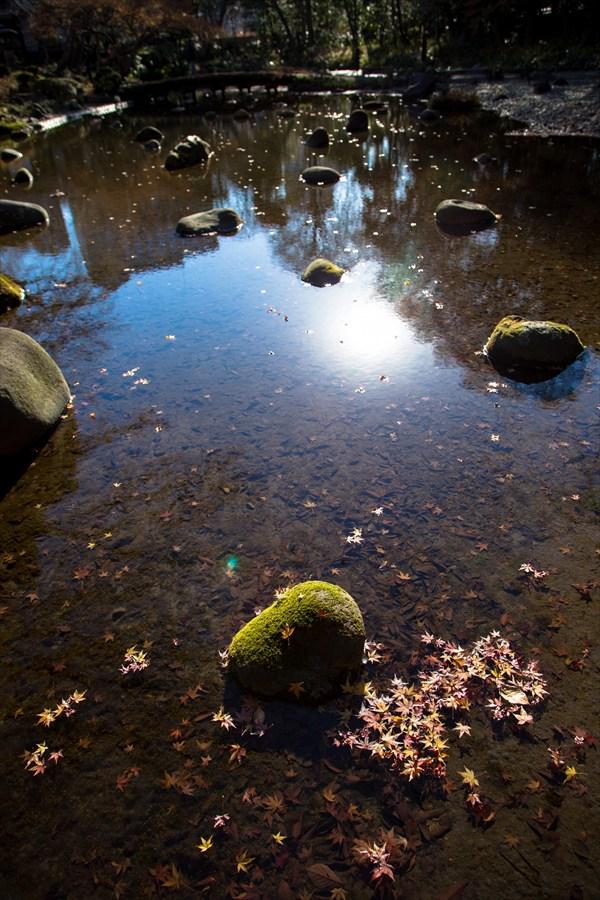 小石川後楽園水辺の落葉02