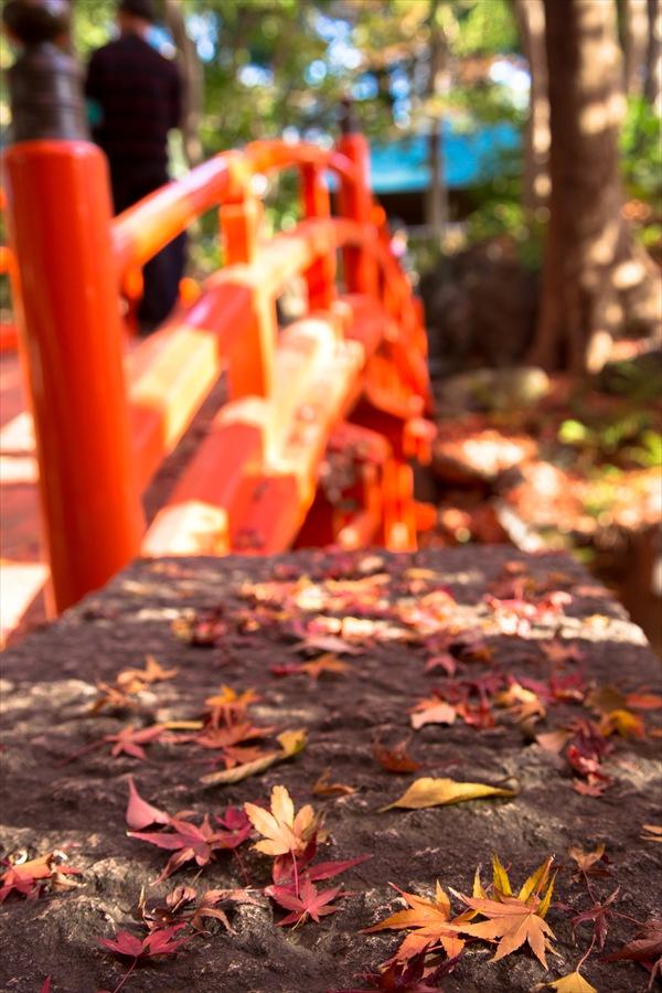 小石川後楽園石の上のな残り落葉01