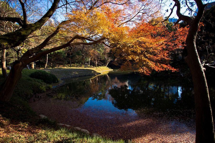小石川後楽園池周辺三景02