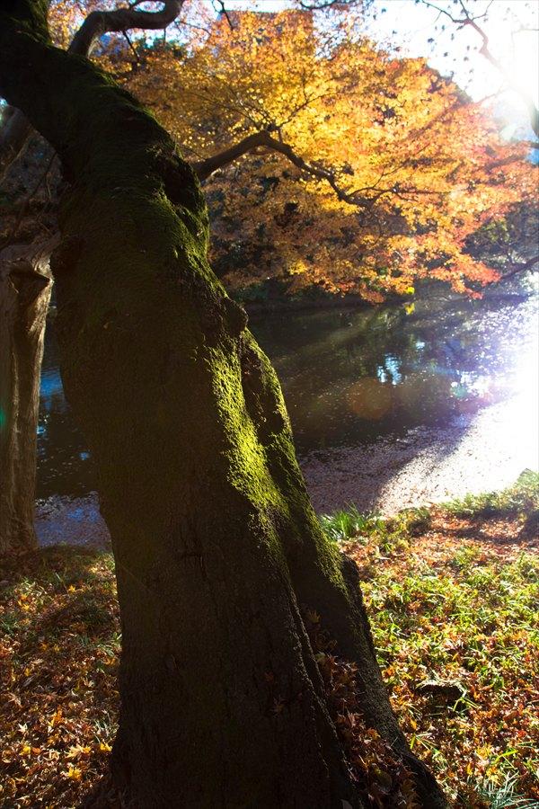 小石川後楽園気に入り写真01