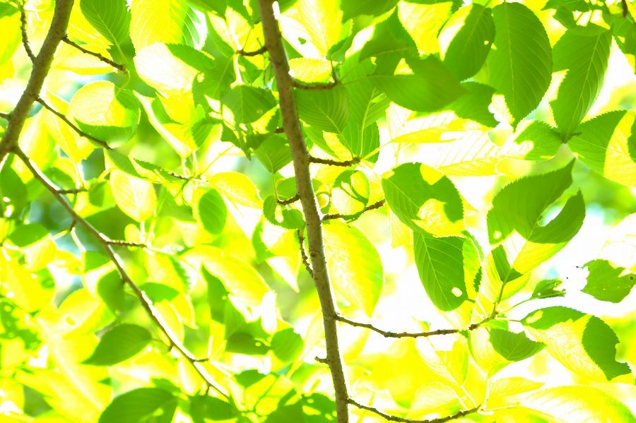 ハイキー葉っぱ01