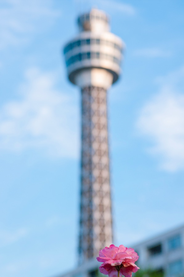 横浜公園山下公園バラピンクマリンタワー