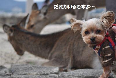 DSC_0011_20141121195701498.jpg