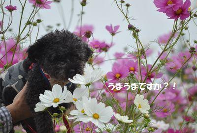 DSC_0031_20141017193303978.jpg