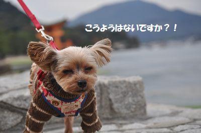 DSC_0043_2014112119574713d.jpg