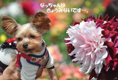 DSC_0093_2014092916050283e.jpg